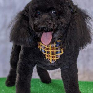 South Tulsa Grooming Company - Dog 1