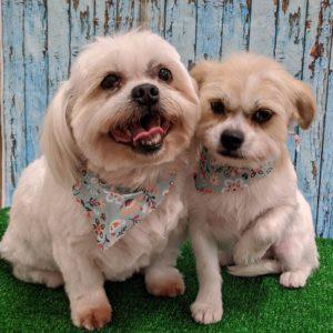 South Tulsa Grooming Company - Dog 4